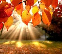 1395364828-autumn-leaves.jpg-original