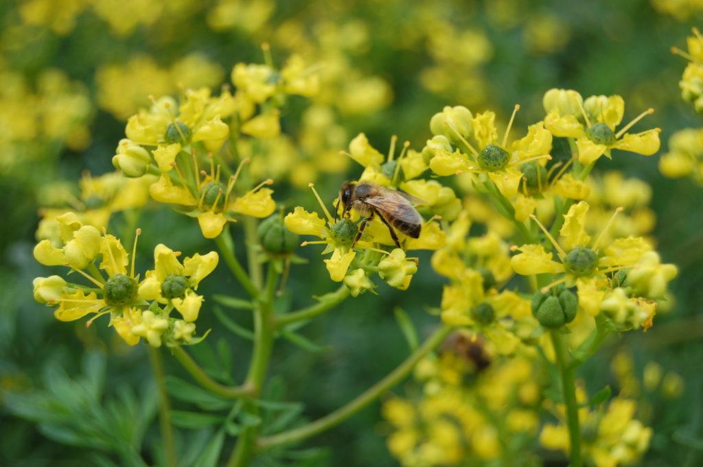 kolo-pszczelarzypl