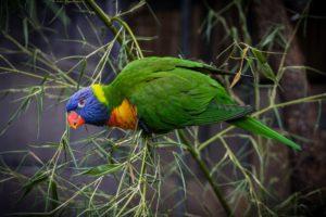 bird-1574300_1920