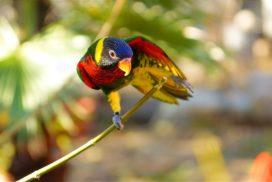 parrot-1870971_1920