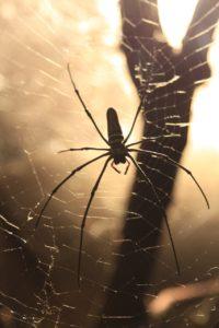 spider-1042662_1280