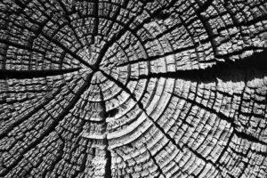 tree-1276204_1280
