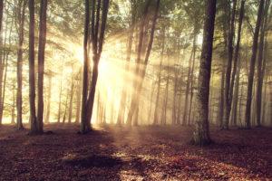 lasy_lecza