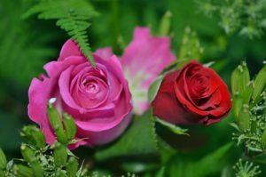 roses-208980_1280
