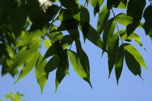 leaves-141567_1280
