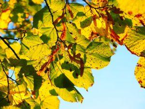 leaves-767515_1280
