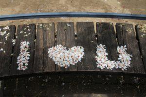 miaoli-tung-flowers-1777850_1280