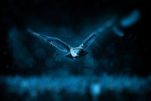 owl-518838_1280 (1)