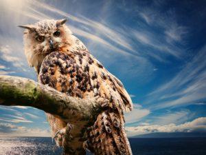 owl-591302_1280