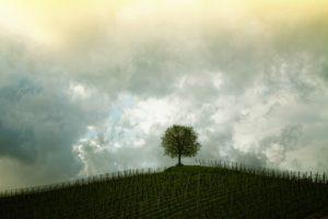 tree-207584_1280