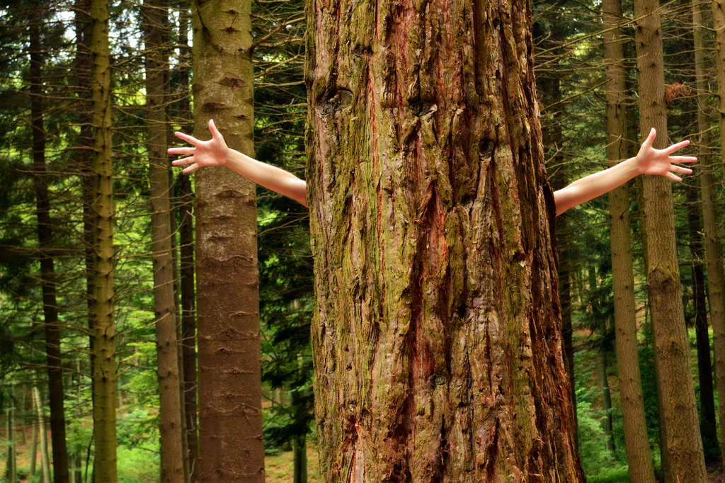 właściwości drzew