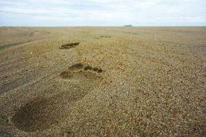 footsteps-732128_960_720