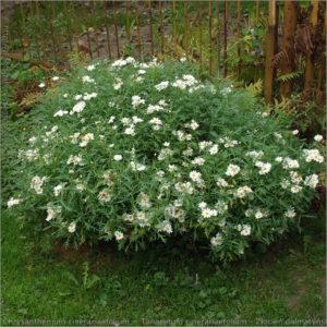 źródło: www.plantsgallery.blogspot.com