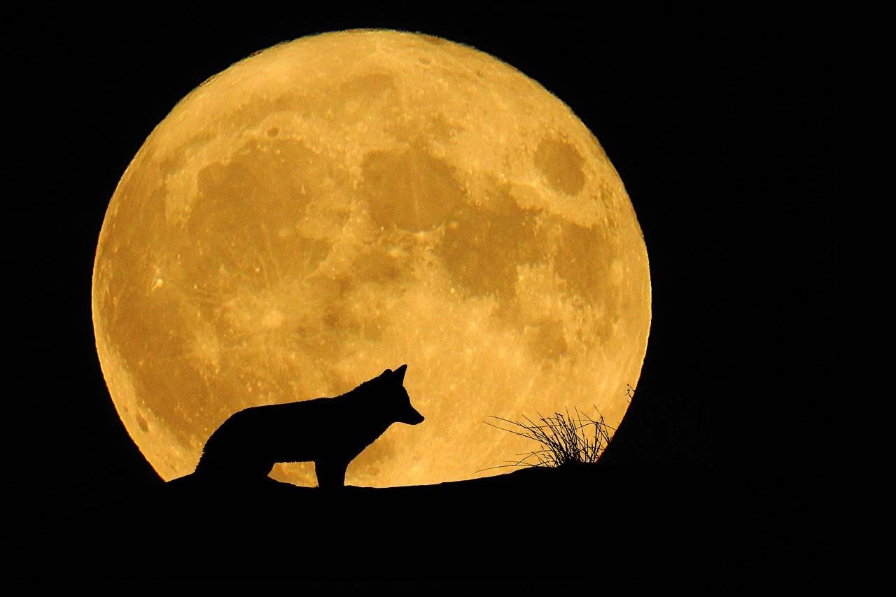 Księżyc w czerwcu 2020
